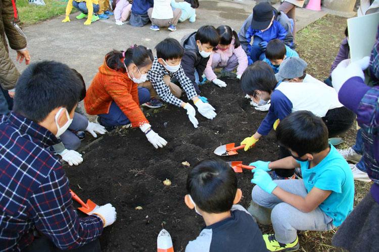 玉縄小学校でユリの植え付け